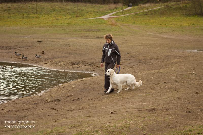 Šuo turi eiti greta ir tik po vedlio komandos atnešti žaisliuką