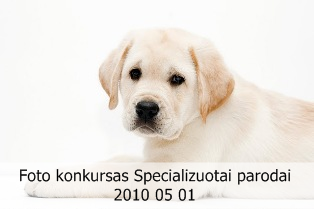 Foto konkursas Specializuotai retriverių parodai 2010 05 01