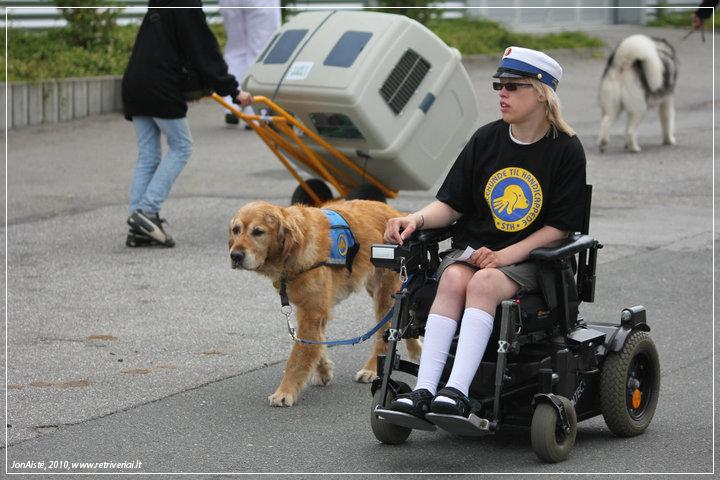 Auksaspalvis retriveris - puikiai padeda neįgaliesiems