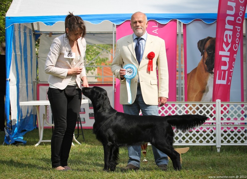 Alko Ant Bangos (Whizzbang's Mexican Afterburn x Bagera Nemunas) - excellent - 1/2, LT CAC, N (best male)