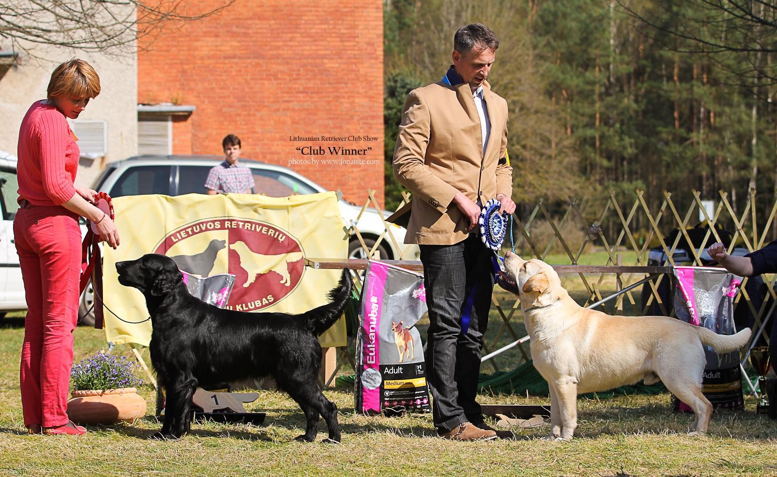 Gražiausi parodos šunys - lygiaplaukis retriveris Get Smart Mega Oskaras, sav. Sigita Pileckytė - Norbutienė ir Labradoro retriveris Rocheby Pop Larkin, sav. Ramūnas Godeliauskas.