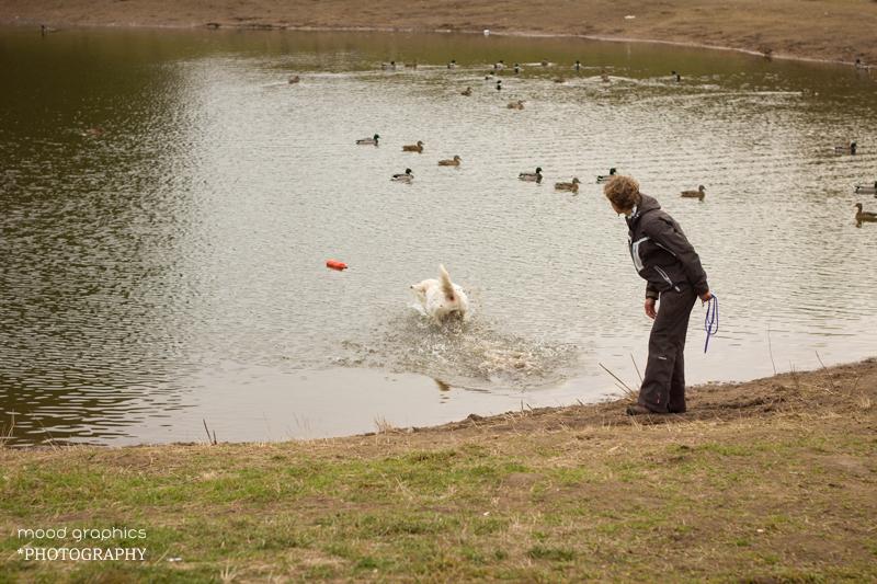 Po komandos šuo turi šokti į vandenį, paimti žaislą ir atnešti jį vedliui trumpiausiu keliu