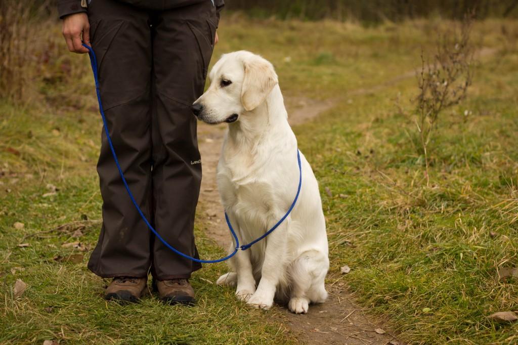 Šuo sėdi vedliui iš kairės, laukia savo eilės