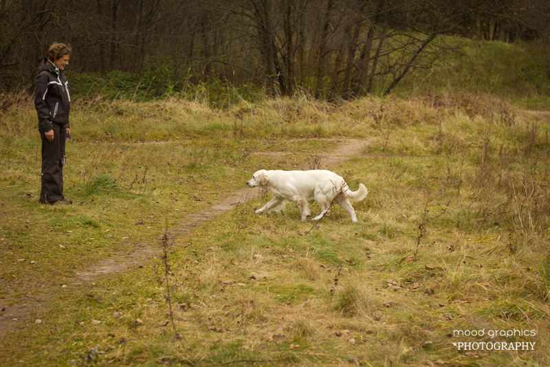 Paskutinėje pratimo dalyje šuo kviečiamas ateiti iki vedlio