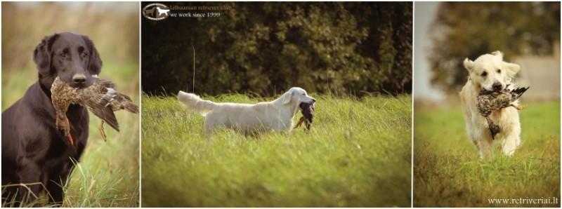 Laukiame dalyvių spalio 27 d. bandymuose, taip pat visų, kuriems įdomu turiningai leisti laisvalaikį su šunimi!