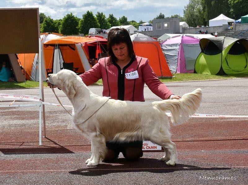 Xmas Mascot