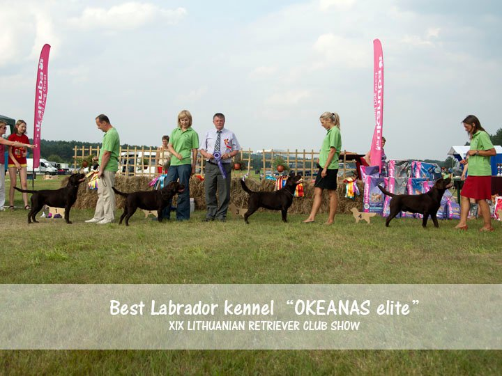 "Geriausias Labradoro retriverių kennel  ""OKEANAS ELITE"", own. Virgilijus Bumbulis, photo by V. Bumbulio"